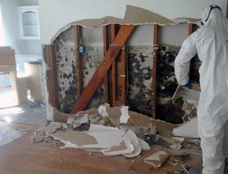 Mold Damage and Repair - Epic Restoration LLC